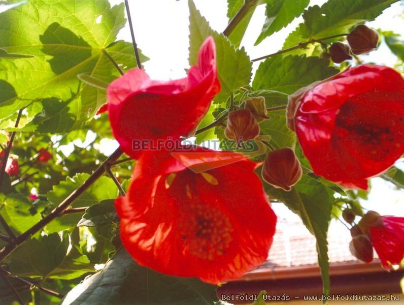 Virágos Vendégház (4)