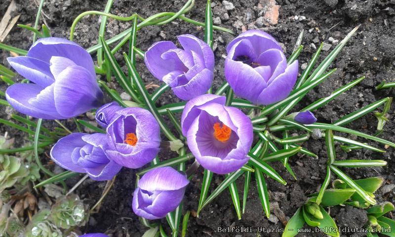 tavaszi előkert