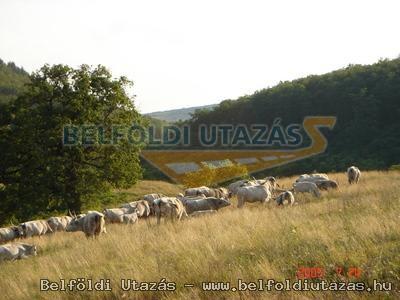 Fekete Kos Fogad� (14)