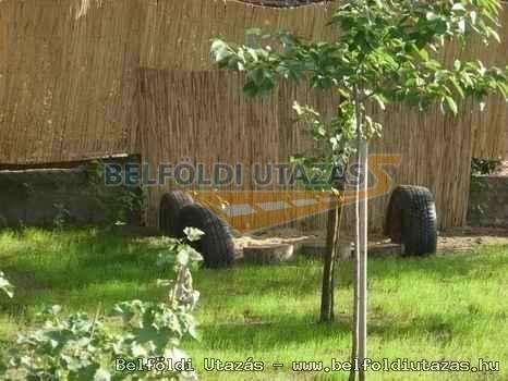Boglárka Guesthouse (10)
